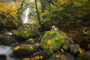 Cuteness, Dog, Fall, Waterfall, Puppies, Dogs