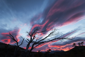 A tree burns with the colors of sunrise, Patagonia, Argentina