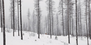 Winter, Cold, Deer, Visitor, Whitefish, Montana, Winter in Montana