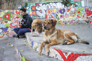 A man and two dogs enjoy a cooler afternoon in a colorful park