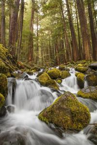 Stream, River, Woods, Forest, Olympic Peninsula, Washington, Stream