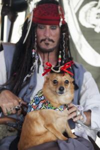 Pirate, Funny, Pirates Festival
