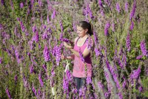 Flowers, Wildflowers, Beautiful, Field of Wildflowers