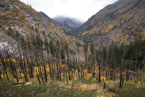 Icicle Canyon, Fall Colors, Autumn, Washington, Leavenworth