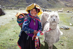 Llama, Peru, Ausangate, Peruvian, llamas