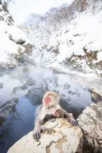 Two monkeys relax in a hot springs in Japan
