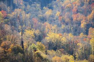Fall Colors, Autumn, Great Smoky Mountains, Appalachians