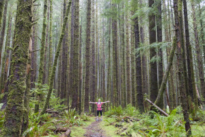 A hiker showing a forest in Tillamook County, Oregon some love