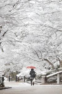 Snow, Japan, Winter in Japan, Snowy Walk