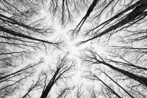 Despondent, Hopeless, Winter, Forest, Dark Forest, Haunted